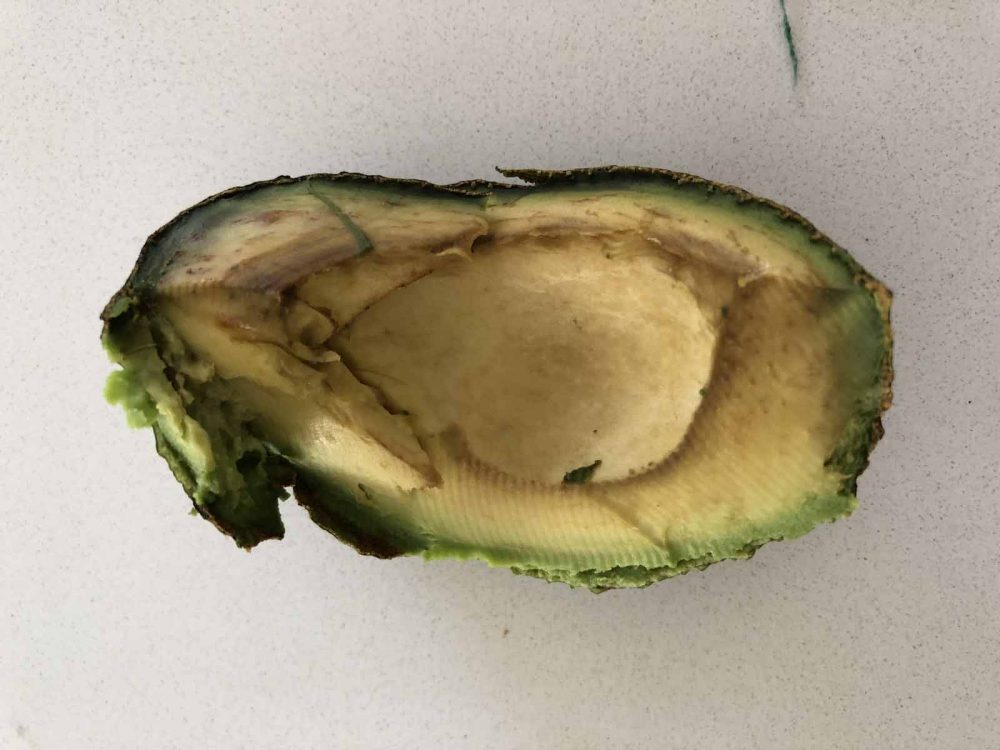 An avocado left in a fridge crisper for a couple of days has started going brown.