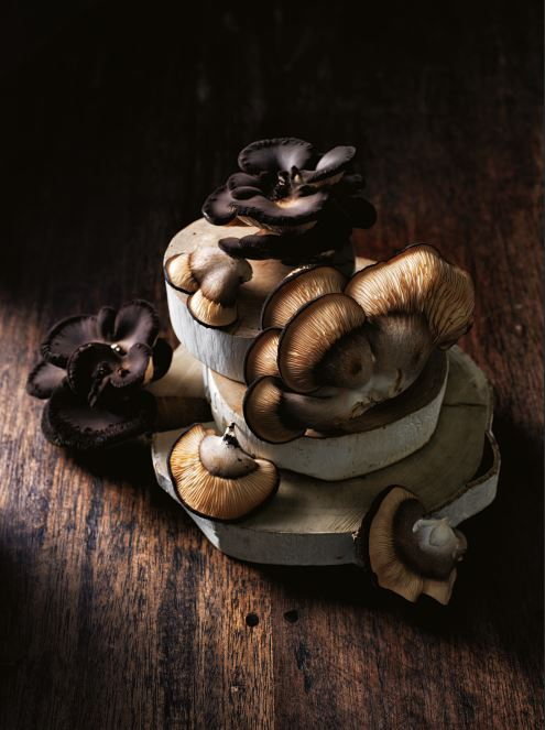 Abalone Mushrooms from Unearthed Co. Mushrooms.