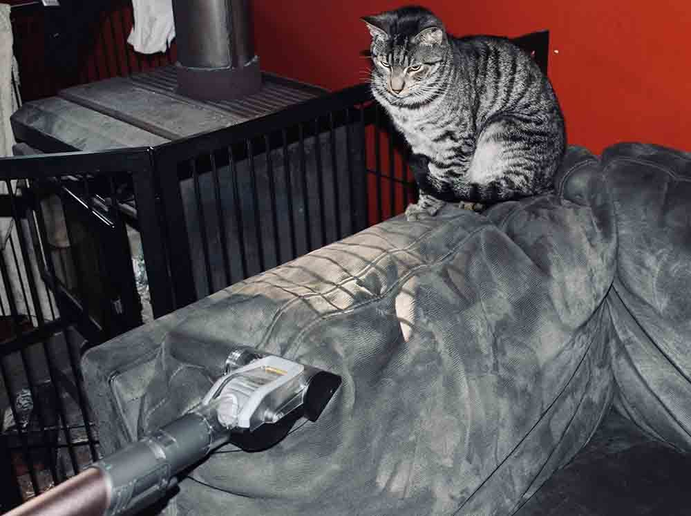 Using the Shark PZ1000 to vacuum a lounge, while a cat sits watching on!