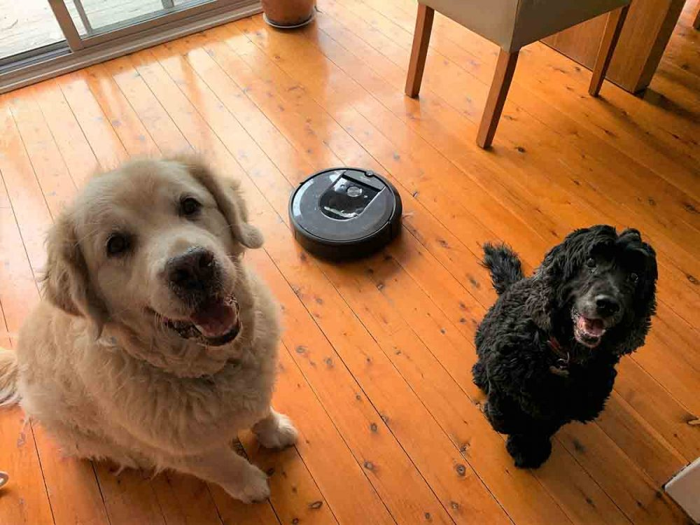 The iRobot Roomba i7+ Robotic Vacuum cleaning up the hair of two dogs!